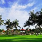 Bintan Lagoon Resort - Palm trees